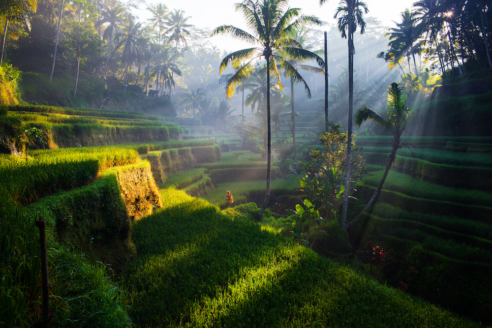 Rice terraces in Ubud. Source: Getty
