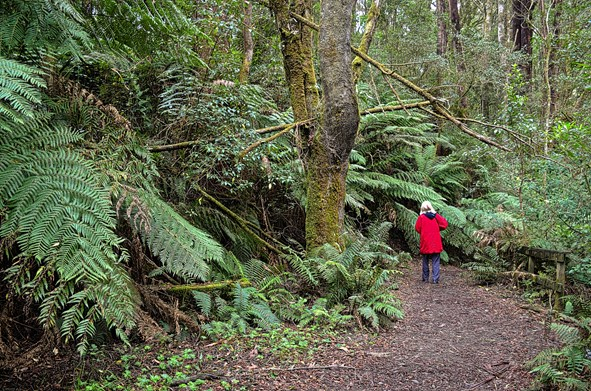 Lorraine's first steps into the forest. Source: Ian Smith